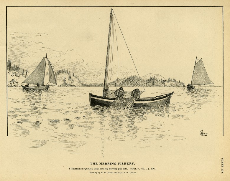 The Herring Fishery. Plate 123