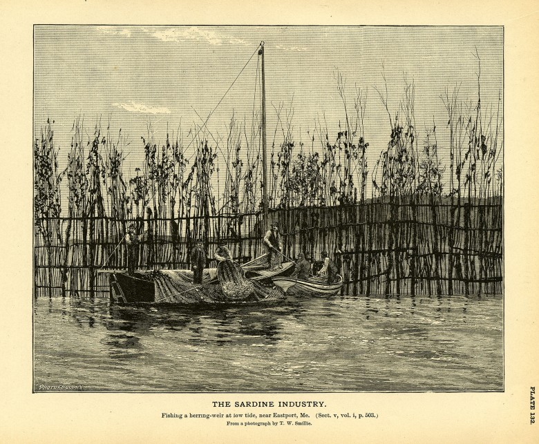 The Sardine Industry. Plate 132